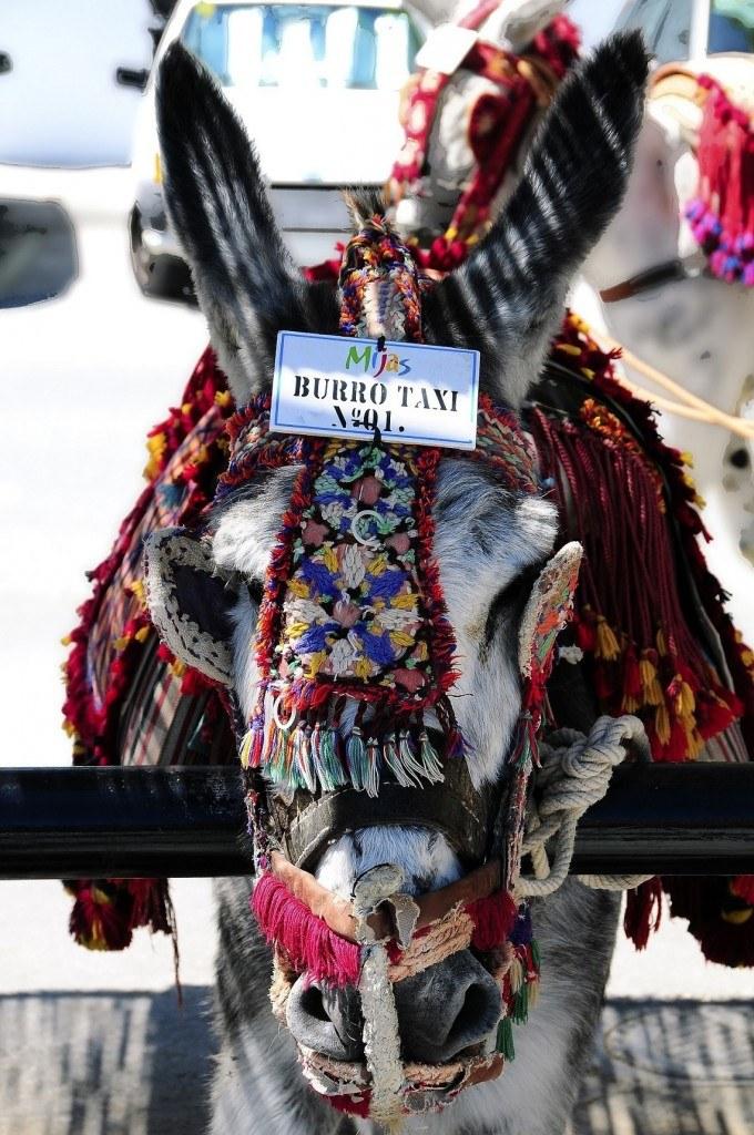 Donkey taxi Mijas Pueblo